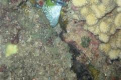 ocean-surveys05