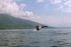 ocean-surveys09