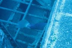 ocean-surveys12