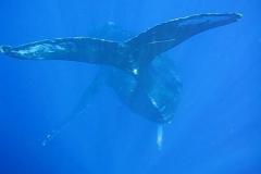 ocean-surveys13
